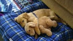Cute Baby Animals and Their Cuddly Friends