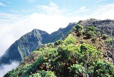 Off Trail on Kauai: Treks Beyond the Guidebooks - Waialeale, Kapoki Crater and the rainiest place in the world, the summit of Kauai - Kawaikini.