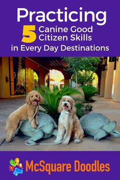 Different destinations hold new distractions. Want to gauge whether your therapy dog in training will respond to cues? Visit a variety of places to up your game & offer opportunities to work on distinct Canine Good Citizen skills. Click to read our 20 ideas for places to socialize and train your dog. #mcsquaredoodles #therapydogs #dogtraining #caninegoodcitizen Therapy Dog Training, Therapy Dogs, Dog Training Tips, Potty Training, Dog Minding, Good Citizen, Pet Dogs, Pets, Dog Behavior