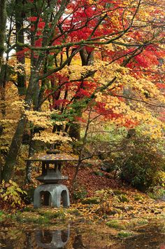 A stone lantern under autumn colored maples, Nikko Tamozawa Imperial Villa, Honshu, Japan