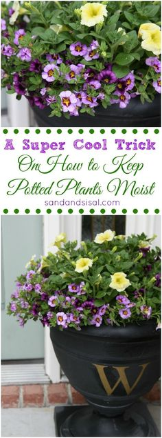 Container Gardening Ideas A Super Cool Trick on How to Keep Potted Plants Moist Longer - Tired of having to water your potted plants everyday? You have to check out this super cool trick on How to Keep Potted Plants Moist longer. Container Plants, Container Gardening, Gardening Tips, Succulent Containers, Container Flowers, Vegetable Gardening, Outdoor Plants, Potted Plants, Outdoor Gardens