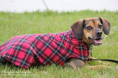 Keep Your Dog Warm this Fall with Gold Paw Series Fleece Pullovers | http://www.beaglesandbargains.com/dog-warm-fall-gold-paw-series-fleece-pullovers/