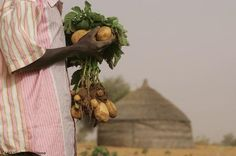 Fact Sheet: Nutrition-Sensitive Agriculture