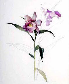 orquideas.jpg 332×400 ピクセル