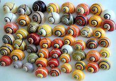 Seashell Painting, Seashell Art, Paint Brush Art, Shell Collection, Snail Shell, Beautiful Bugs, Cuba, Shell Crafts, Deco Table