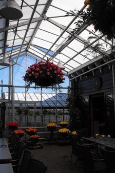 Een oude kas als decor rozenshow in Historische Tuin Aalsmeer