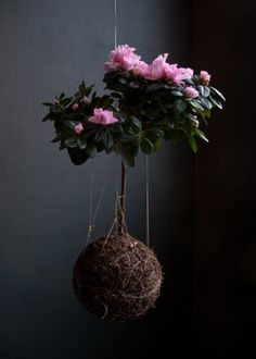 "String Gardens ""Kokedama"""