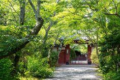 吉野門 - 常照寺 / Jyosyo-ji Temple | by Active-U