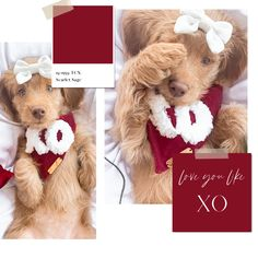 The Deluxe Pup   Dog Bandana   Valentine's Day Dog Bandana Signature Collection, Dog Bandana, Dog Accessories, Hand Stitching, Flannel, Pup, Applique, Teddy Bear, Bows