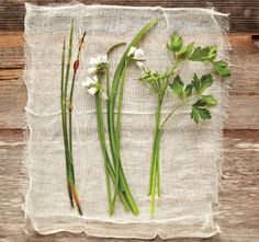 A Guide to Drying Herbs and Spices - Food and Recipes - Mother Earth Living