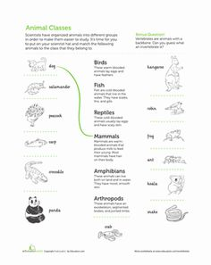 Life science on Pinterest | Life Science, Worksheets and Life Cycles