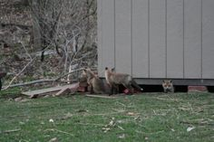 These little guys found a new home under my shed. - Imgur