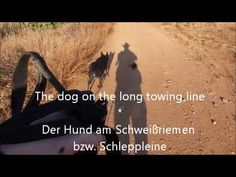 The dog on the long towing line Long A, Line, Dogs, Movie Posters, Fishing Line, Film Poster, Doggies, Popcorn Posters, Film Posters