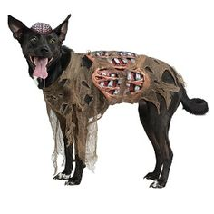 costume halloween pet zombie dog party supplies decorations products goods costumes