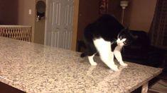 Cat crip walks as seen on AFV!!