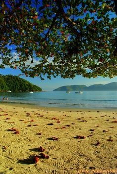 Delicious and beautiful beach in São Paulo LÁZARO beach Ubatuba, Sao Paulo Brazil - The water is like a swimming pool, no waves. Beaches In The World, Places Around The World, Around The Worlds, Belize, Brazil Beaches, Places To Travel, Places To Visit, Brazil Travel, Best Vacations