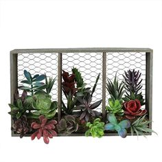 10 inch Artificial Mixed Succulents Arrangement in Wood with Chicken Wire Box Wall Decor, Green