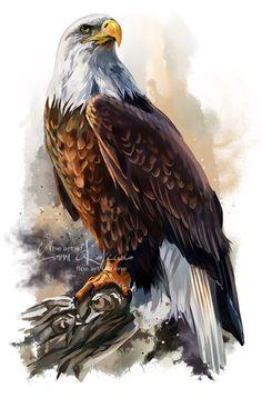 The bald eagle by Kajenna.deviantart.com on @DeviantArt