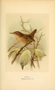 n244_w1150 by BioDivLibrary, via Flickr