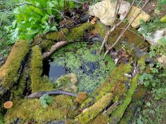 Groene Tenen - ecologische tuinen