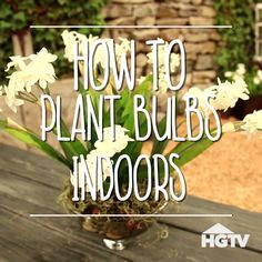 How To Plant Bulbs Indoors                                                                                                                                                                                 More