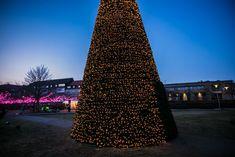 Drömljus Light Festival - Helsingborg's snowing, walk-through tree Helsingborg, Light Decorations, Christmas Trees, Skyscraper, Multi Story Building, Lighting, Inspiration, Xmas Trees, Biblical Inspiration