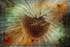 To Seed 3. Photo art by WB Johnston, available as prints in a large variety of sizes.