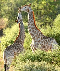 animals wilderness love animals adorable animals animals smiling animal life happy animals the animals amazing animal beautiful animals animals amazing christmas animals animals design excited animals woodland animals animal protection wildlife quotes safari animals wildlife animals animals mating wilderness animals africa animals african animals photography animals winter animals africa travel africa africa quotes africa inspiration africa wear african recipe places to visit in africa Smiling Animals, Happy Animals, Safari Animals, Woodland Animals, Animals Amazing, Adorable Animals, Animals Beautiful, Excited Animals, Africa Quotes