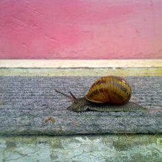 slowtips.blogspot.com