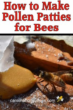 How to make pollen patties for bees and use them to build strong honey bee colonies. How To Start Beekeeping, Beekeeping For Beginners, Honey Bee Farming, Beeswax Recipes, Bee Facts, Bee Food, Bee Hive Plans, Raising Bees, Backyard Beekeeping