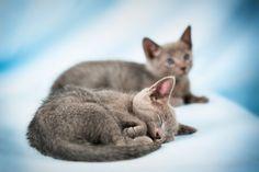 Sleeping Beauty #animalbffs