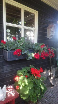 De Wadden Tuun   Maison Poortman: PERLAGONIUM Plants, Home, Garten, Planters, Plant, Planting