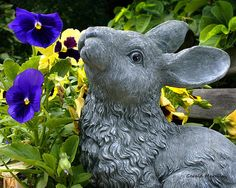 Garden Bunny And Pansy by Gerald Marella