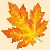 Leaf Template Printable, Montessori Activities, Painted Leaves, Leaf Shapes, Rug Hooking, Leaf Design, Autumn Leaves, Indoor Plants, Arts And Crafts