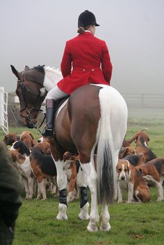 Lady whip with her hounds by Amy Fair - Hurworth Photography, via Flickr
