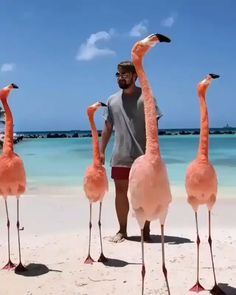 PsBattle: confused man and flamingos Funny Birds, Cute Funny Animals, Funny Animal Pictures, Funny Dogs, Funny Humor, Cute Animal Videos, Beautiful Birds, Animals Beautiful, Animals And Pets