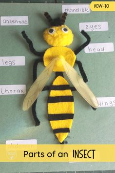 Parts of an Insect : Learn about parts of an Insect with this fun labeling craft. A fun craft activity- or craftivity, to learn about parts of an insect! Insect Activities, Animal Activities, Montessori Activities, Kindergarten Activities, Preschool Activities, Preschool Science, Science For Kids, Preschool Crafts, Insect Crafts