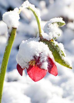 Google Afbeeldingen resultaat voor http://www.anwb.nl/binaries/images/nieuws/wintersport/fotograferen-macrofotografie/original.jpg