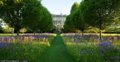 Spectacular: Camassia, buttercups and dandelions bloom in the wildflower meadow in front of Highgrove House