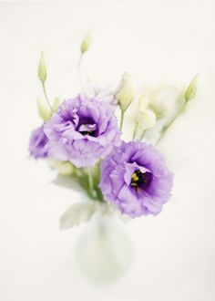 floral inspiration-lisianthus