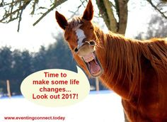 Your horse's agenda for 2017 is a lot different than yours...