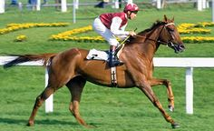 Oh So Sharp - Doncaster 1990 Oh So Sharp (foaled 1982 in Ireland, died 2001) was a successful racehorse trained in Great Britain by Henry Cecil. She ended her racing days with a hard-won defeat of Phardante in the St. Leger Stakes to complete the fillies' version of the Triple Crown.