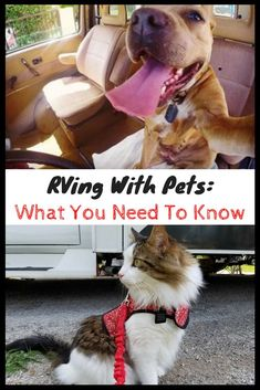 473 Best Its An Rv Dog Life Images On Pinterest In 2018 Group