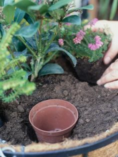 Hydrating Potted Plants