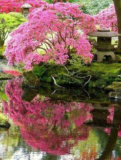 schöner garten rosa baumkrone