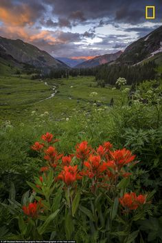 This photo by Jeff Stoddart, called 'Flowers Last Night,' was taken at the Ice Lake Basin in Silverton, Colorado. Stoddart wrote: 'The rain had come and gone a number of times throughout the trip. This was the scene that unfolded on the last evening. it was such a site to behold and a great way to end the trip'