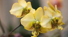 Votre orchidée est sur le point de périr ? Pas de panique, Mon Jardin Ma Maison vous donne tous les trucs pour lui donner un nouveau souffle.