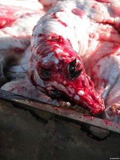 pictures of abused animals | Groups :: Help Abused Animals : What People Have Done to Animals.