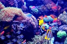Lets Take a trip under the sea! So beautiful, interesting and cool!