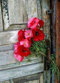 Poppy flowers Mother Terresa, Cut Flowers, Wild Flowers, Poppy Flowers, Green Bedding, Antique Iron, Garden Statues, Flower Beds, Watercolor Art